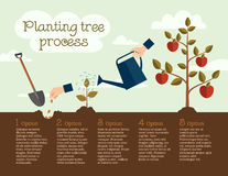 Planting tree process, business concept. Timeline Infographic of planting tree process, flat design Stock Photo