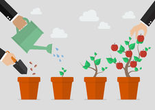 Planting tree process. Financial growth concept Stock Images