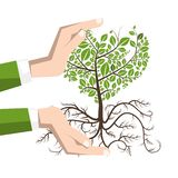 Planting a Tree with Roots. Plant in Human Hands stock illustration