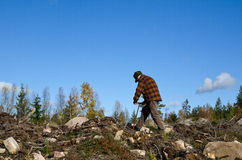 Planting tree seedlings. Man plants pine trees in a clear cut area Stock Photos