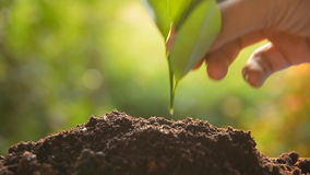 Planting tree sprout stock footage