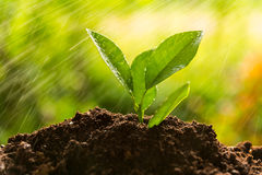 Planting tree, sprout Royalty Free Stock Image