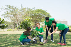 Planting tree. Team of young activists planting tree in the park royalty free stock photo