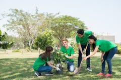 Planting tree Royalty Free Stock Photo