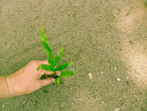 Planting tree to make a little change Royalty Free Stock Photos