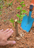 Plant or Planting a tree to protect the environment & counter climate impacts for brighter & better future Stock Photo