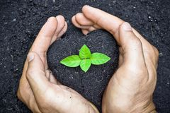 Planting a tree Stock Image