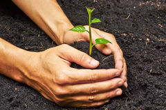 Planting a tree. Two hands growing tree / save the world stock photography