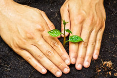 Planting a tree. Two hands growing tree / save the world stock image