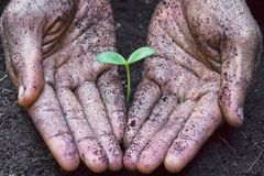 Planting a tree. Two hands growing tree / save the world royalty free stock images