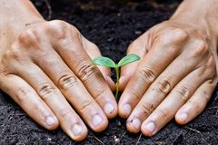 Planting a tree. Two hands growing tree / save the world stock images