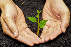 Planting a tree. Two hands holding and caring a young green plant / planting tree royalty free stock photos
