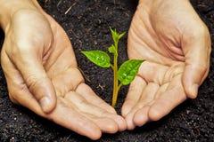 Planting a tree Royalty Free Stock Photos