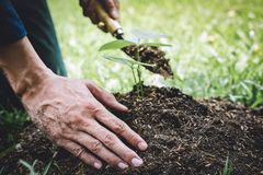 Planting a tree, Two hands of young man were planting the seedlings and tree growing into soil while working in the garden as save. The world, earth day, nature stock photography