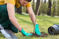 Planting a tree. Young man kneeling during planting a tree royalty free stock photo