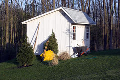 Planting Trees. Backyard shed with pine trees being planted Royalty Free Stock Photography
