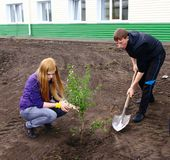 Planting of trees Stock Photography