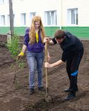 Planting of trees Stock Images