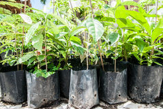 Planting trees Royalty Free Stock Photography