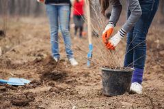 Planting trees Stock Image