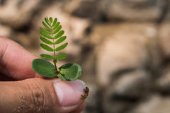 Planting trees back to nature Stock Photos