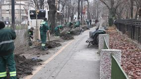 Planting trees in the city stock video footage