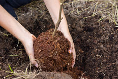 Planting trees Royalty Free Stock Images