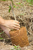 Planting trees Stock Images