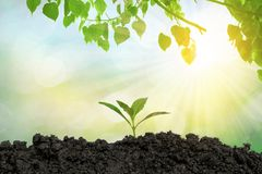 Planting trees in the ground the environment and ecology. Planting trees in the ground the environment and the bokeh background ecology royalty free stock photography