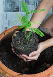 Planting trees at home Royalty Free Stock Images