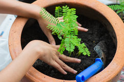 Planting trees at home Stock Photos