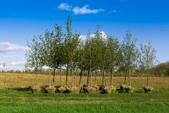 Planting trees Royalty Free Stock Photos