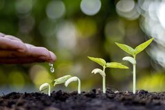 Free Planting Trees On Fertile Soil And Displaying The Stage Of Plant Growth. Stock Images - 200046164