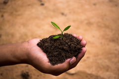 Planting trees to restore forests. Royalty Free Stock Photos