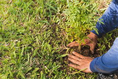 Planting trees to save the world. Campaign Planting trees to save the world stock image