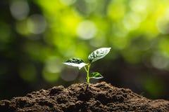 Planting trees Tree growth Seeding Fourth step seed is a tree. Planting trees Tree growth Seeding Fourth seed is a tree Stock Images
