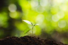 Planting trees Tree growth Seeding Fourth step seed is a tree. Planting trees Tree growth Seeding Fourth seed is a tree Stock Image
