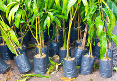 Planting trees. Planting tree on world environment day Royalty Free Stock Images