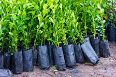 Planting trees royalty free stock photo