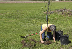 Planting trees Royalty Free Stock Image