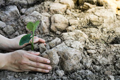 Planting trees for the world concept. Stock Image