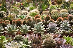 Planting various succulent plants and cacti stock photography