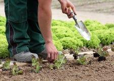 Planting vegetable garden royalty free stock photo