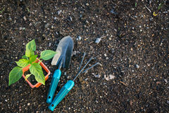 Planting vegetables Royalty Free Stock Photography