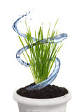 Planting water Royalty Free Stock Photos