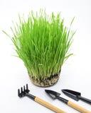 Planting wheat Stock Photos