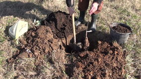 Planting young apple tree in spring stock video