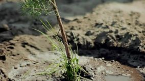 Planting young tree. By kid hand on back soil as care and save wold concept stock footage