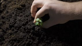Planting young tree by kid hand on back soil as care and save wold concept.  stock footage