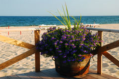 Plantings at the beach Royalty Free Stock Photo
